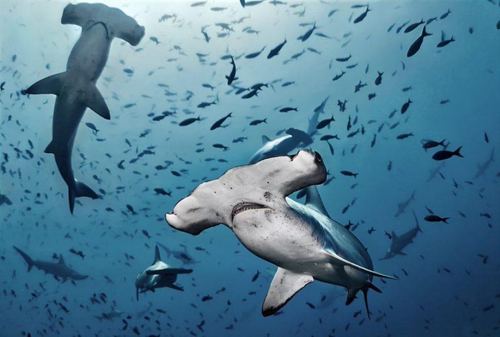 La crisis política de Perú deja incierto el futuro de uno de los grandes tesoros del océano |  Opinión