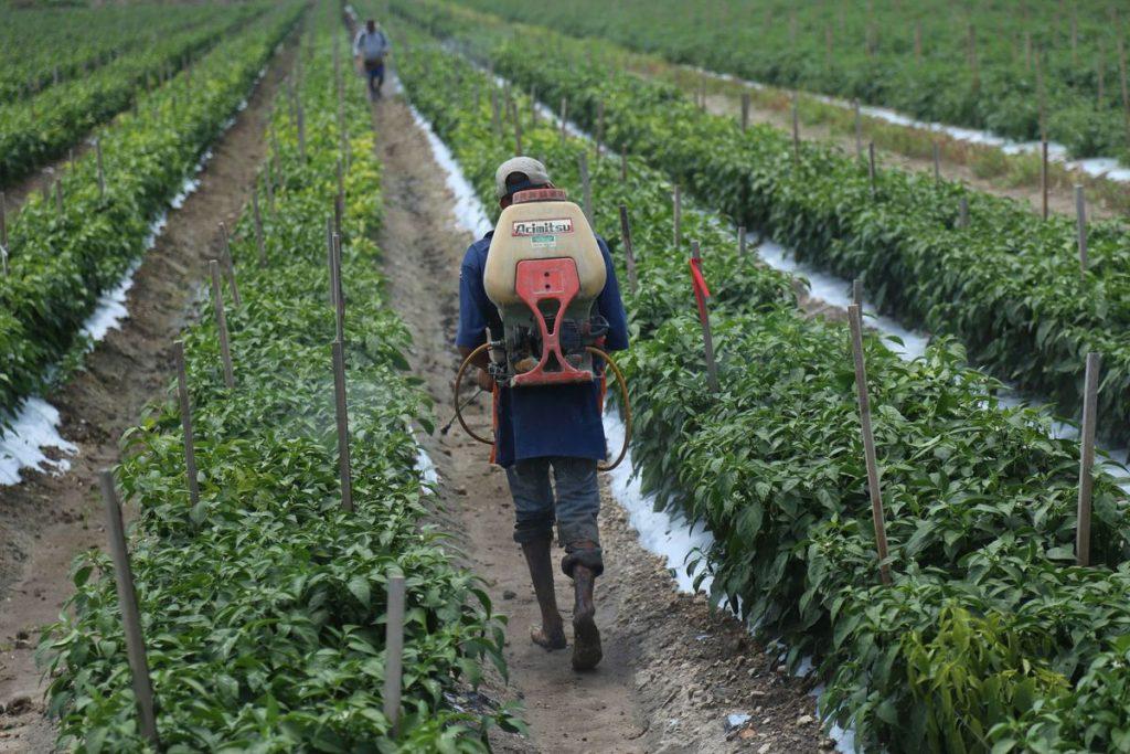 Monsanto impugna ante los tribunales la prohibición del glifosato en México