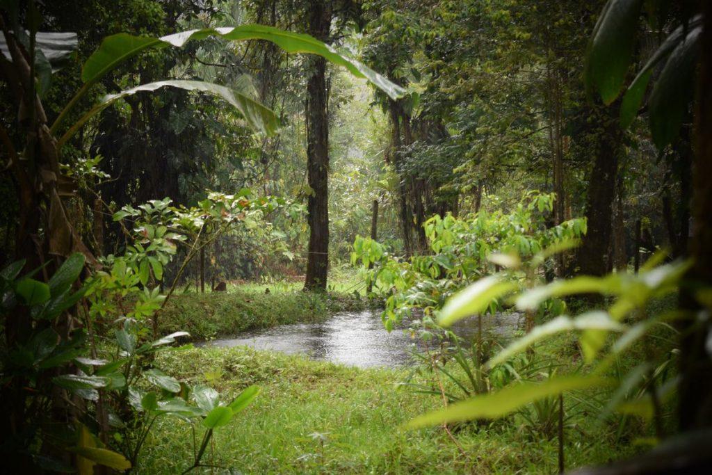 Para ayudar al planeta, debemos ayudar a los protectores de los bosques    Red de expertos    Planeta futuro