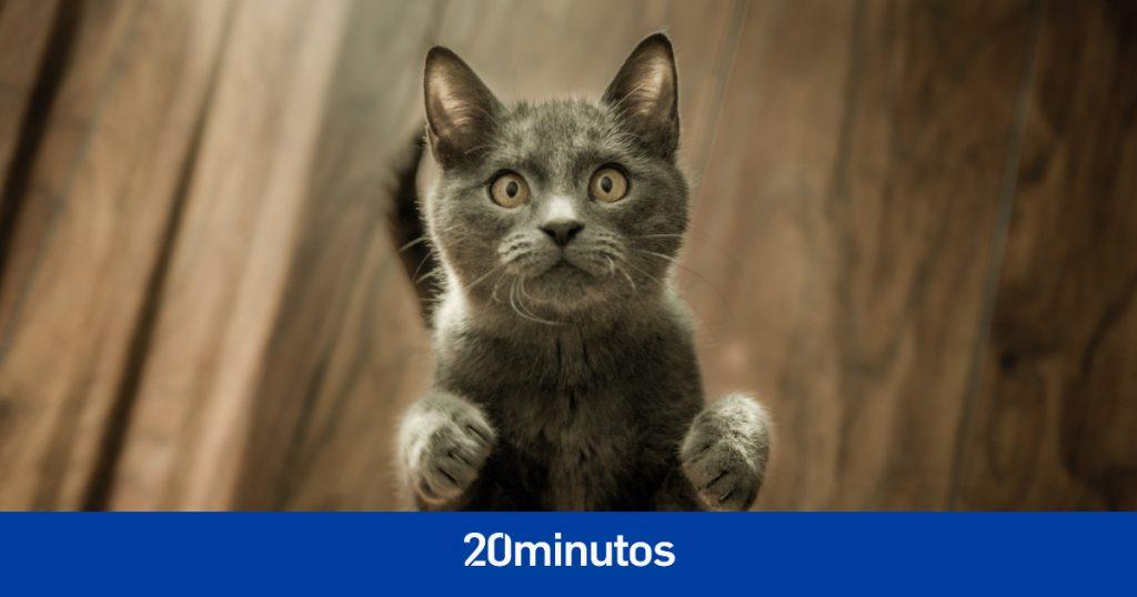Encuentra en Madrid el cadáver de una mujer parcialmente devorada por sus gatos y cinco de ellos también muertos