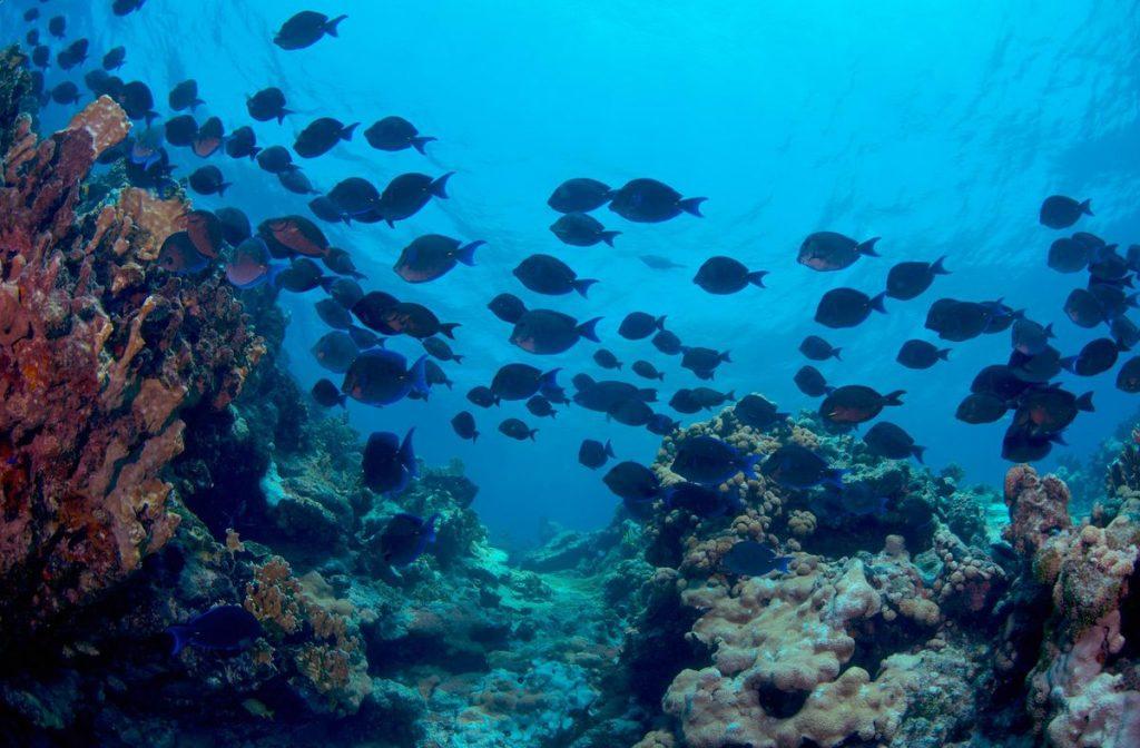 Oceana: la pesca ilegal socava los ecosistemas marinos más ricos de México