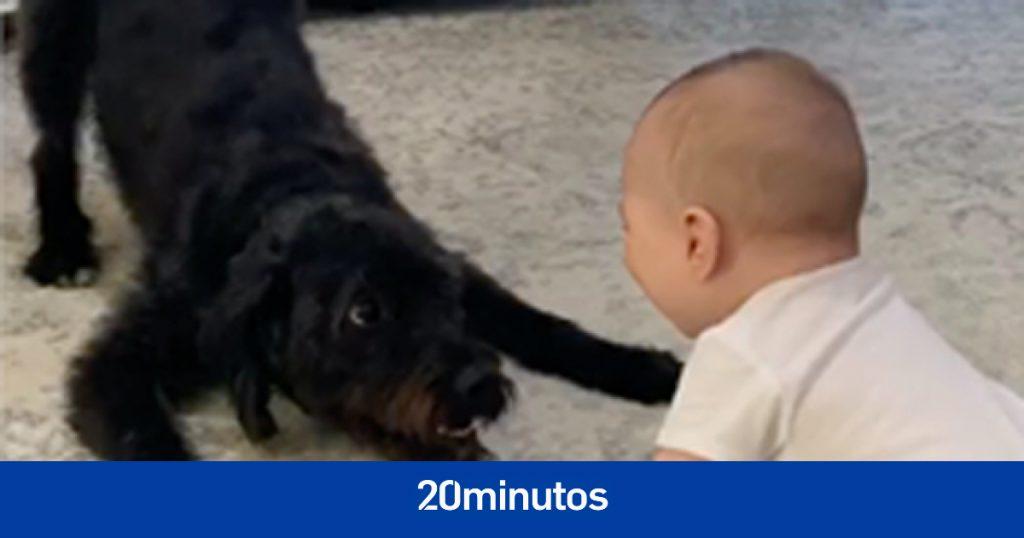Bebé de tres meses muere después de que atacaran a un perro mientras dormía en el dormitorio