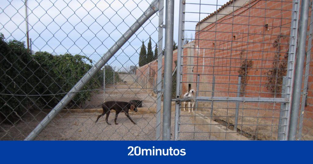 """Dos mujeres condenadas a seis meses de prisión por el estado """"deplorable"""" del perro que tenían que cuidar"""
