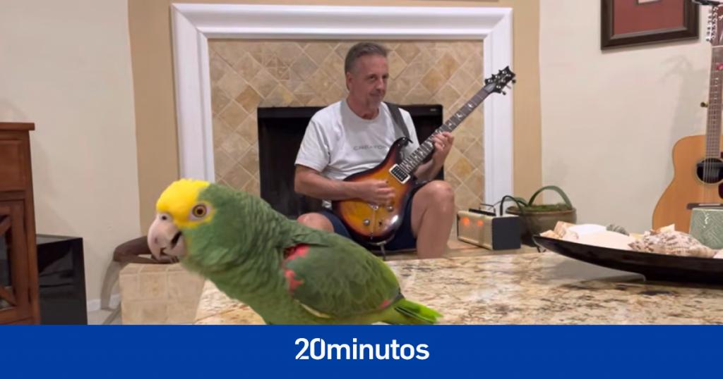 El loro que canta clásicos del rock y se volvió viral en YouTube