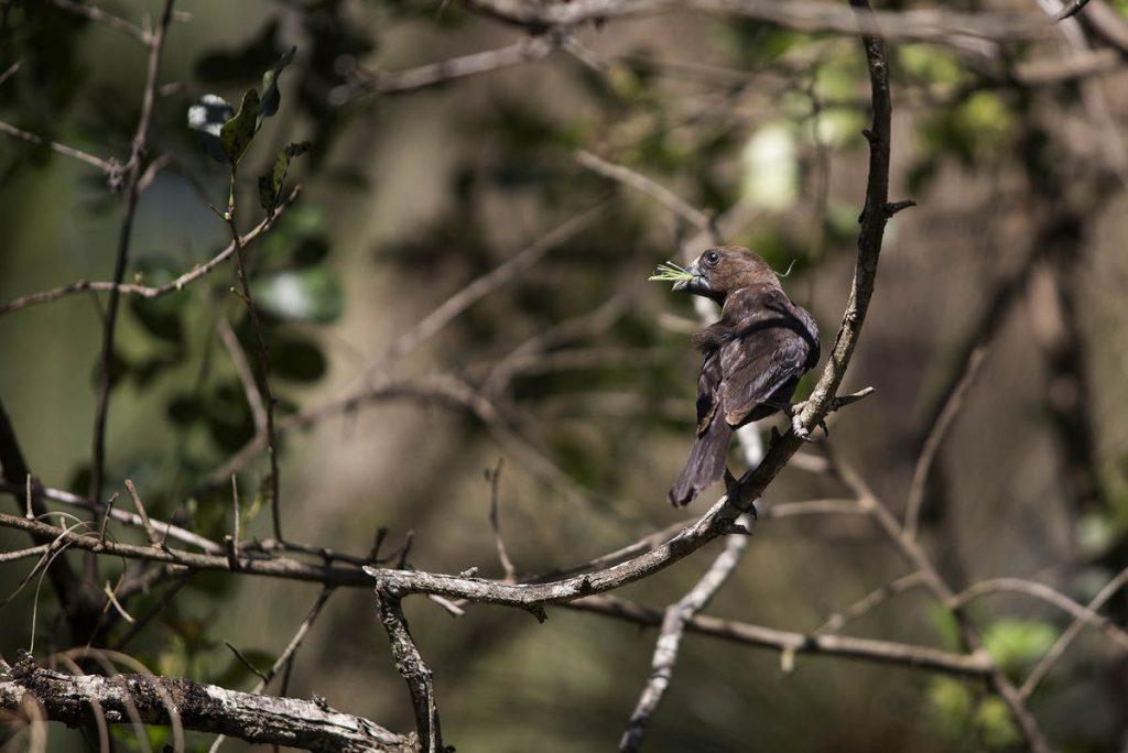 ¿Por qué todos los pájaros cantan al anochecer?     Los científicos responden