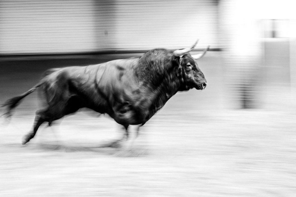 Pandemia taurina (2): el drama del toro de lidia es que hoy no vale lo que cuesta criarlo |  Cultura